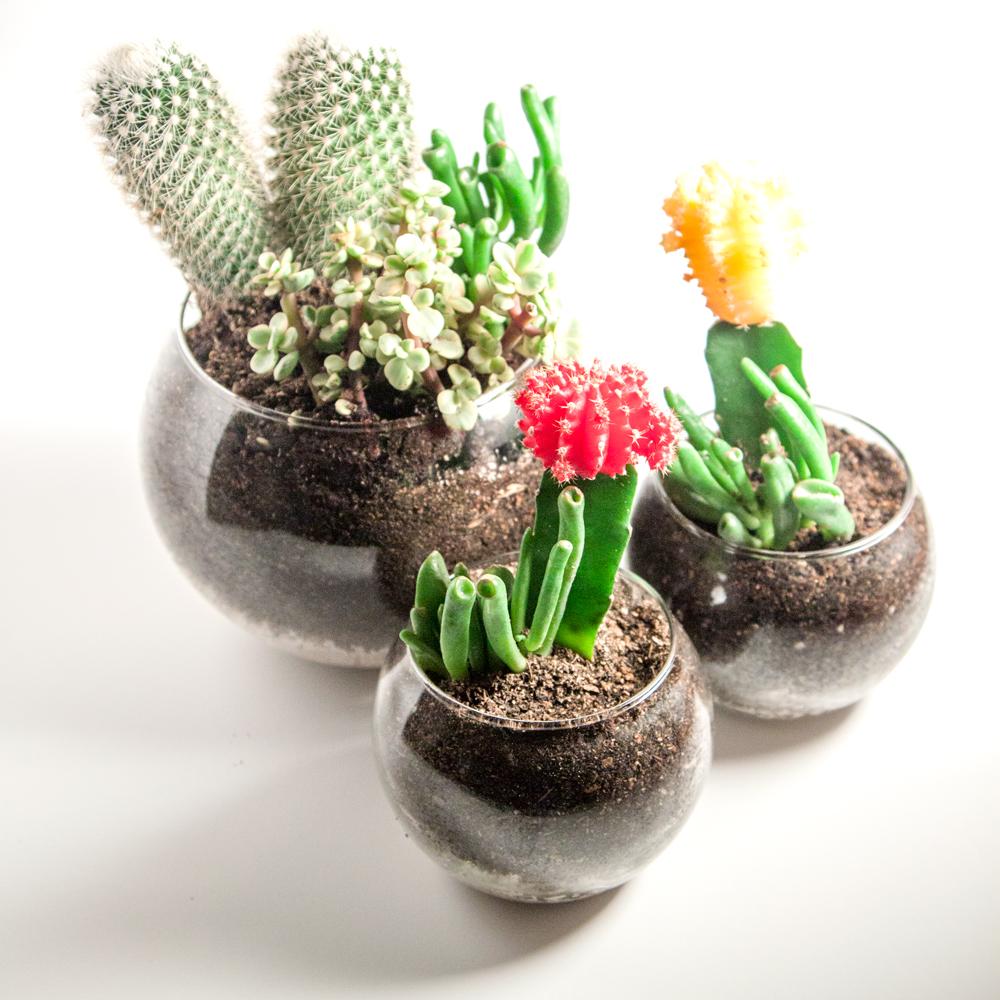 Diy Succulent Cactus Terrariums Thesassylife