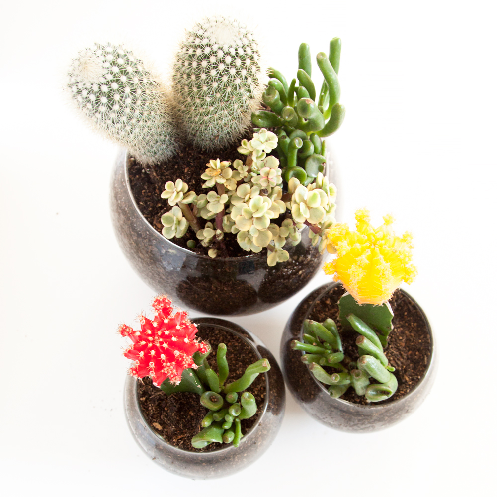 CACTUS and SUCCULENT Journal 2012 Vol 84 Full Year 1-6 Complete